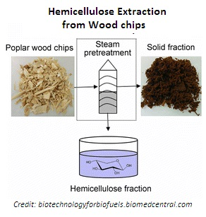 Hemicellulose Extraction from Wood Chips