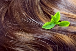 Formulating Hair Care with Natural Ingredients